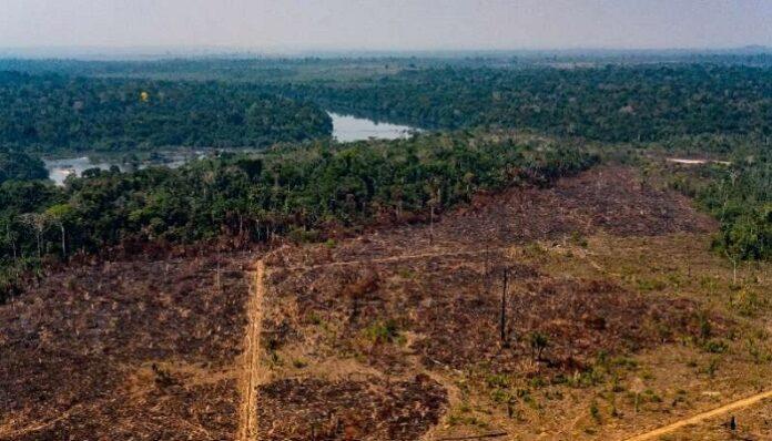 amazzonia-coronavirus-deforestazione-record