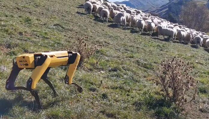 cane-robot-pastone-esperimento