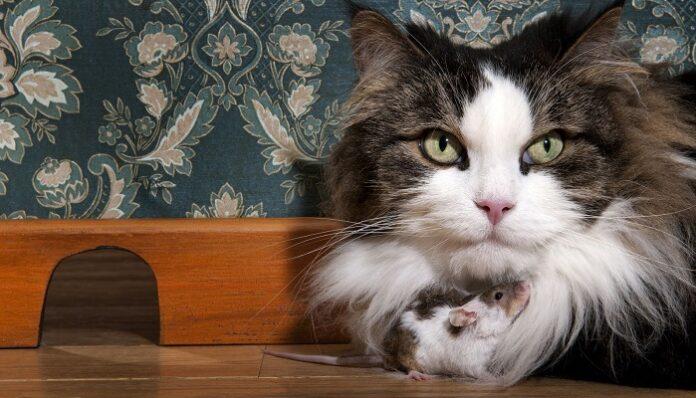 gatti-domestici-tenere-casa