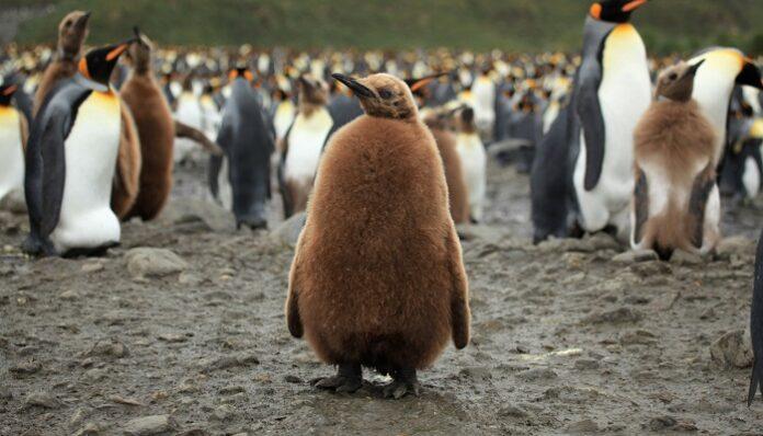 pinguini-reali-studio-escrementi