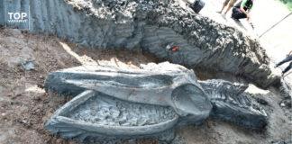 fossile di balena, cambiamento climatico, innalzamento livello del mare