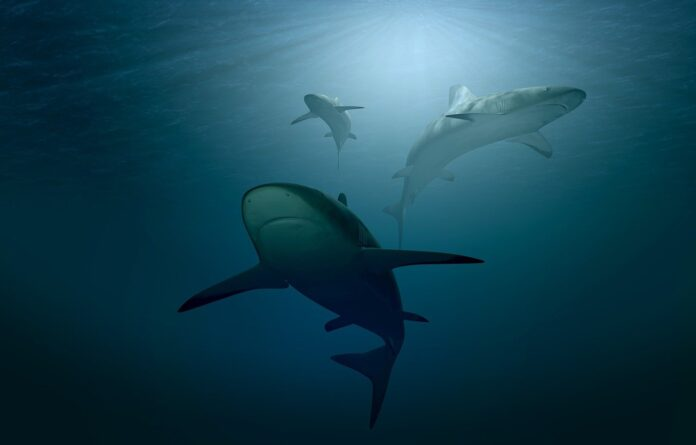 squali, AI, droni