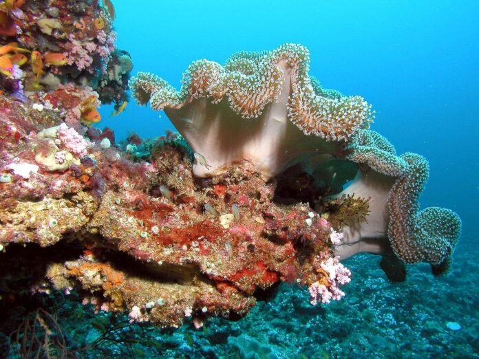 odore dei coralli, conservazione, barriera corallina