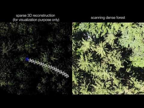 droni, foresta, dispersi