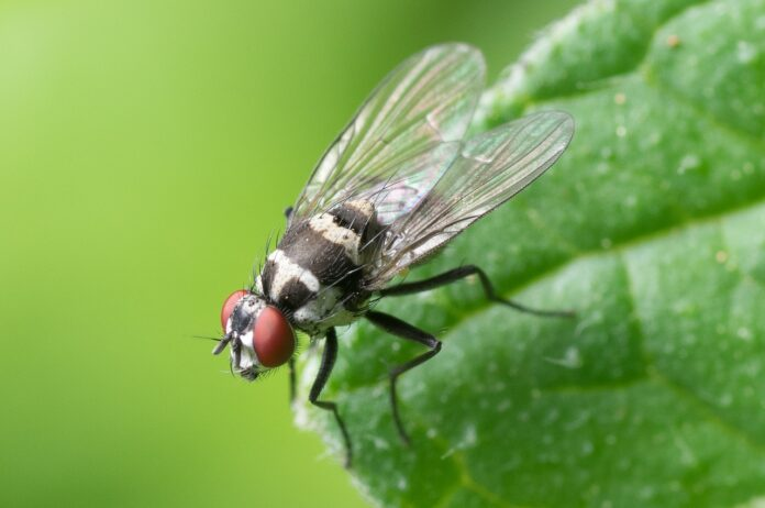 gli insetti che hanno perso le ali