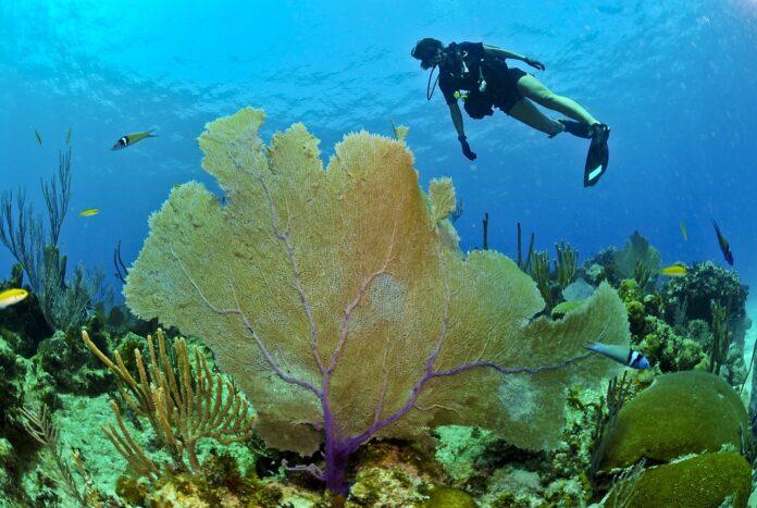 nuove specie, coralli