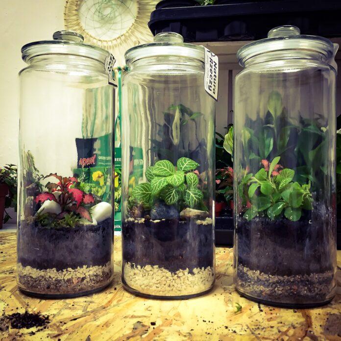 piante MIT laboratorio