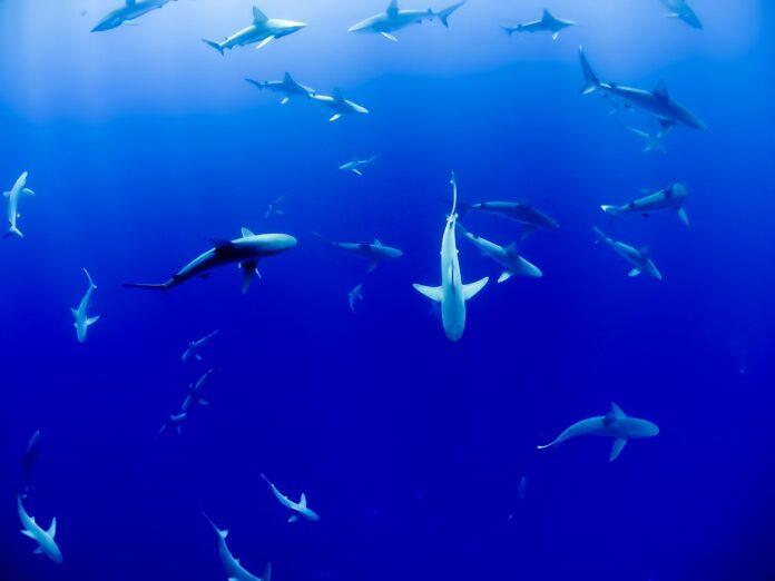 squali, cambiamento climatico, inquinamento, ambiente