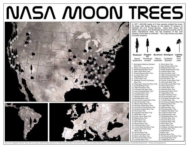 semi dalla luna, alberi lunari