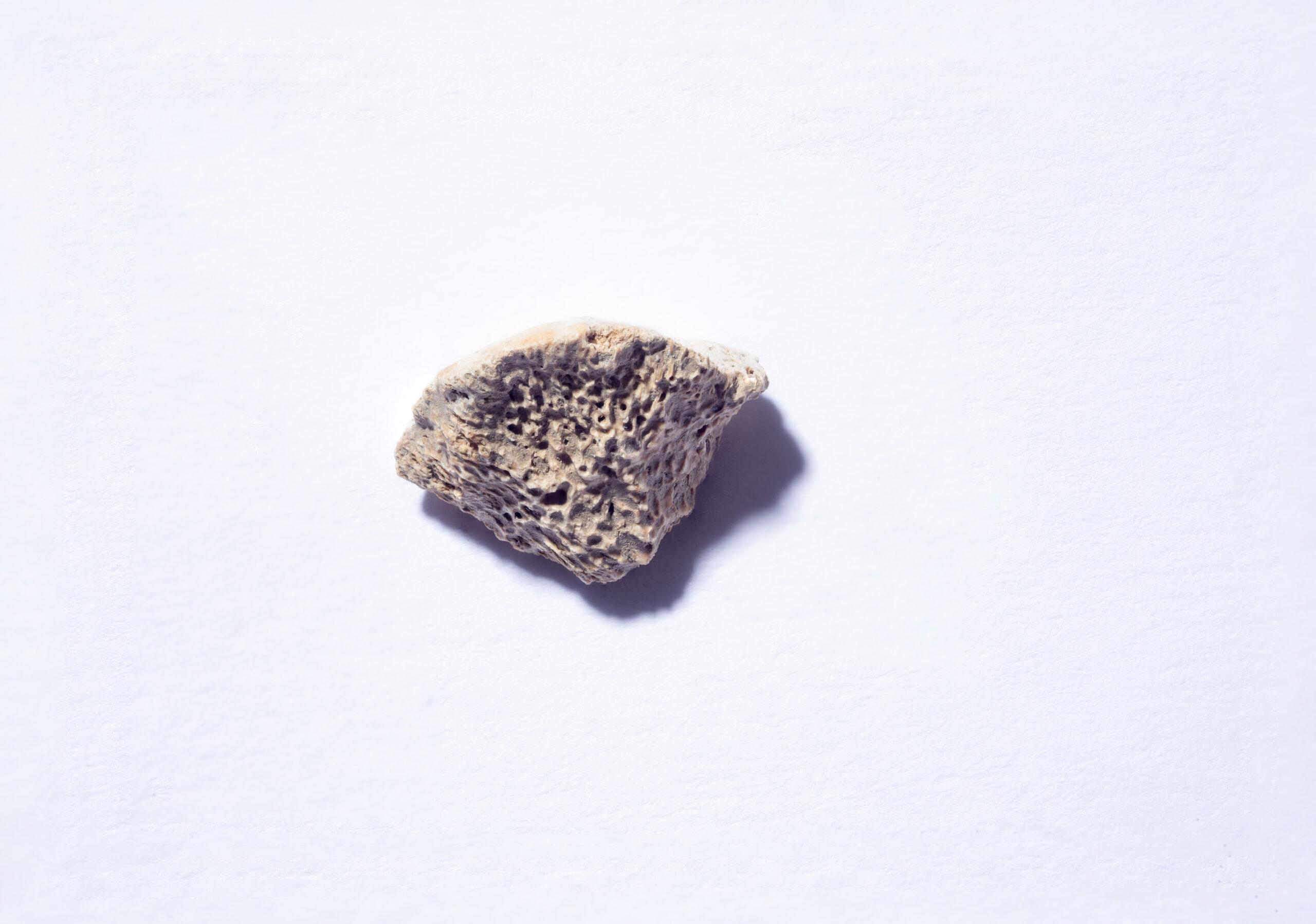 cane più antico delle americhe, frammento fossile, resti fossili cane