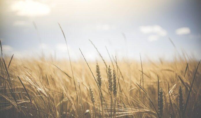 agricoltura contadini robotici