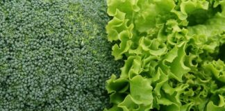 verdure foglia verde funzione muscolare