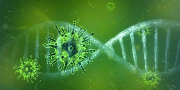 Covid-19 risposte anticorporali
