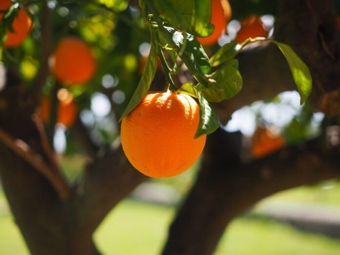 succo di arancia, energia elettrica, energia pulita