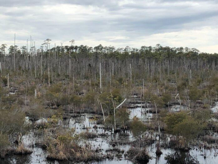 acqua salata, cambiamento climatico, foreste