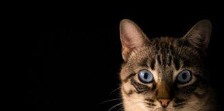 gatto-cia