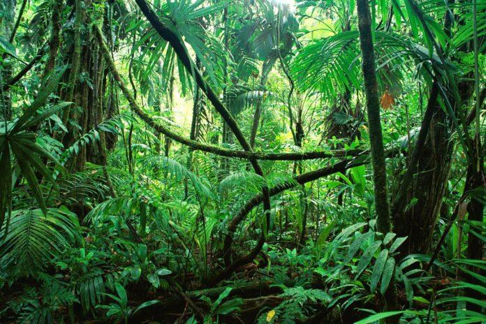 asteroide, dinosauri, estinzione, foresta pluviale