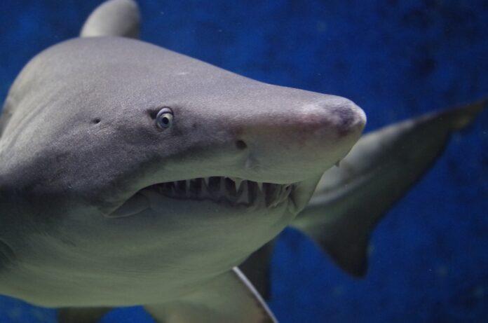 scienziati tecnologia morso squalo
