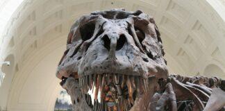 t.rex, jurassic park, inseguimento