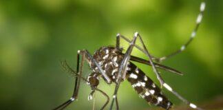 zanzare florida