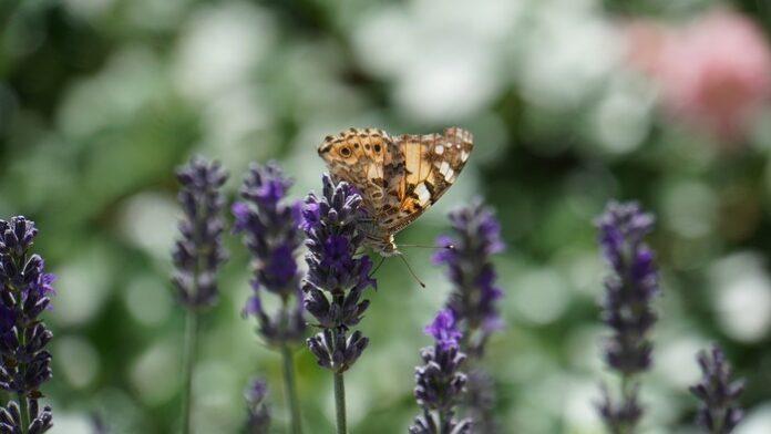 biodiversità specie estinzione