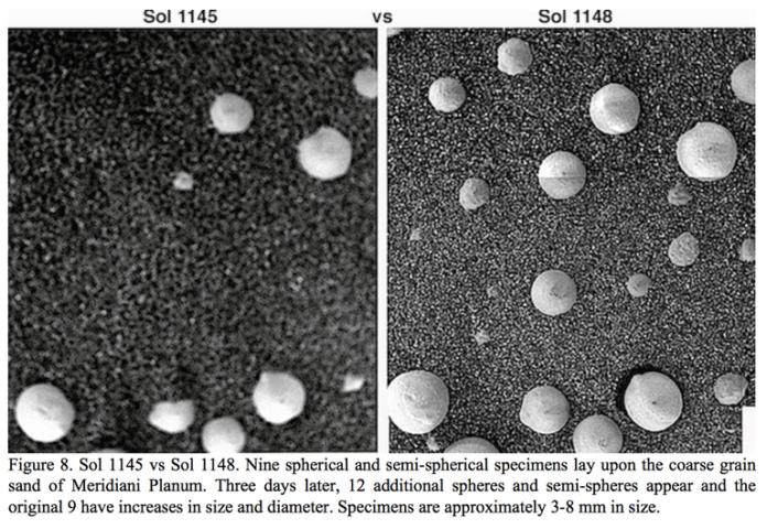 vita su Marte, funghi,