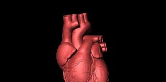 animali attacchi di cuore