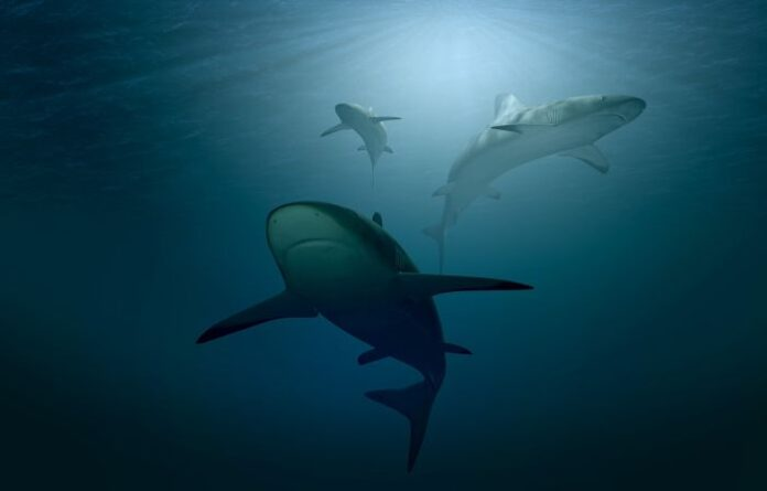 squali campi magnetici