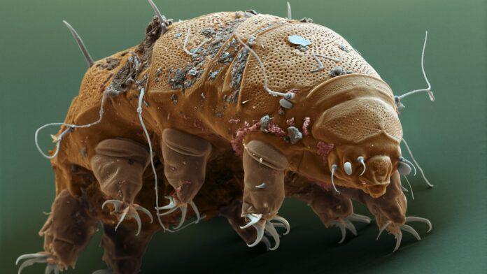 tardigradi, immortali, microrganismi, spazio