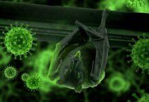 Cina coronavirus pipistrelli