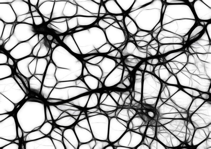 connessioni, neuroni, segnale, cervello,