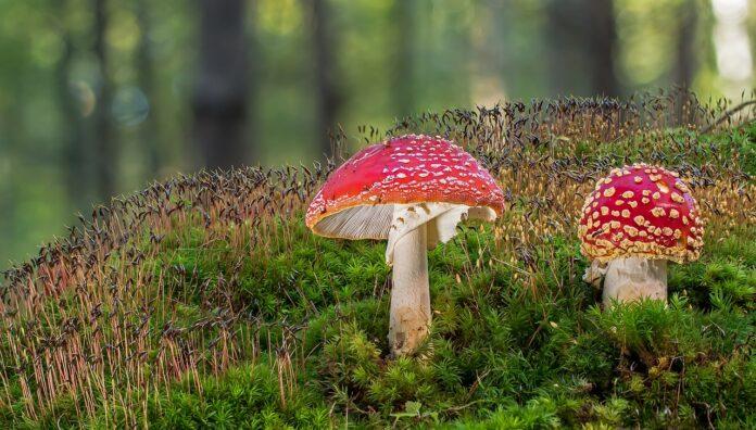 funghi-depressione