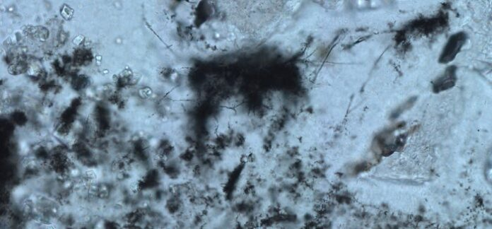 fossili, microfossili, vita aliena,