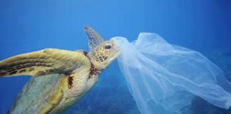 plastica dagli scarti di pesce