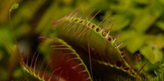 pianta carnivora scienziati