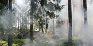 Covid-19 fumo incendi