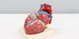 covid-19-coronavirus-cuore-modifiche