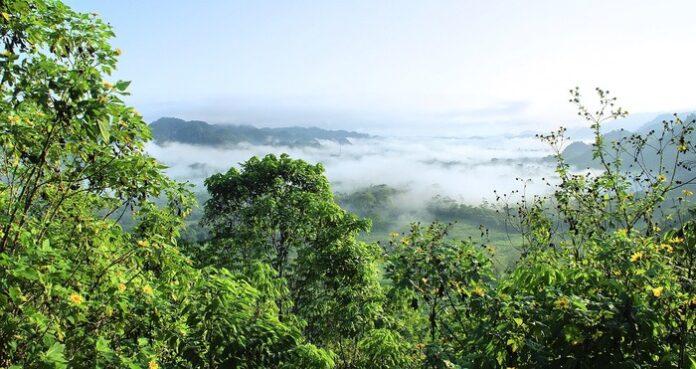 facebook foresta pluviale amazzonica marketplace