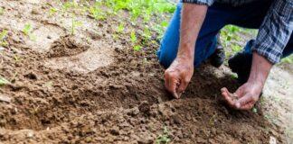Losanna suolo tossico