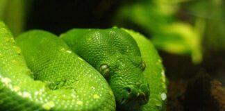 diversità serpenti storia Terra